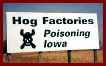 Factory farms poisoning Iowa