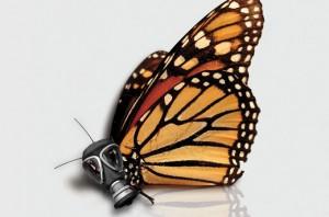 Photo Credit Conservation Magazine