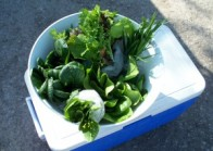Locally Produced Spring Greens