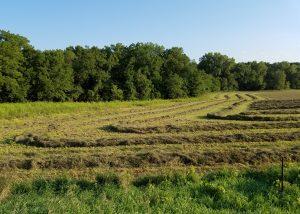 Iowa Farm Field Near Iowa City